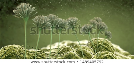 mold colonies macro Stock photo © Mikko