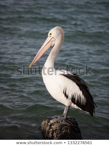 Australiano natação costa lago rei entrada Foto stock © dirkr