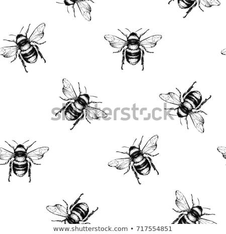 Honey pattern. Design with apiary sketch elements. Stock photo © netkov1