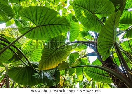 éléphant oreille texture image Photo stock © rafalstachura
