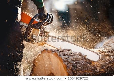 Stock fotó: Favágó · láncfűrész · tart · erdő · vektor · terv