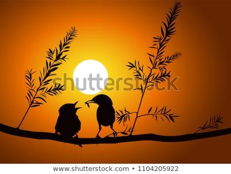 матери птица младенцы природы фон Сток-фото © bluering