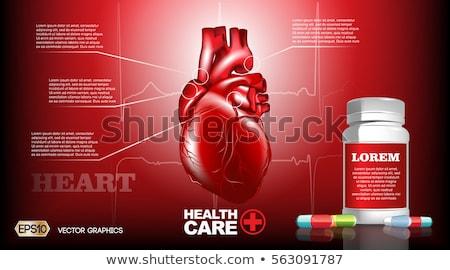 insan · kalp · ayrıntılı · anatomi · renkli · dizayn - stok fotoğraf © tefi