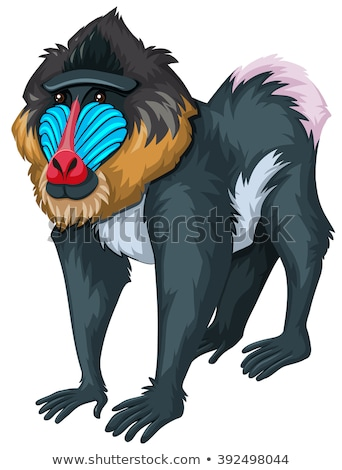 Baboon with happy face Stock photo © bluering