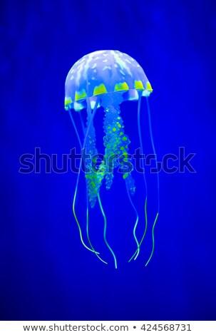 Igazi meduza kék óceán úszik trópusi Stock fotó © cookelma