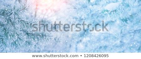 Christmas spruce blue winter background Stock photo © romvo
