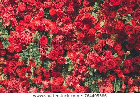 抽象的な · 赤い花 · 春 · 庭園 · 背景 · バラ - ストックフォト © maya2008