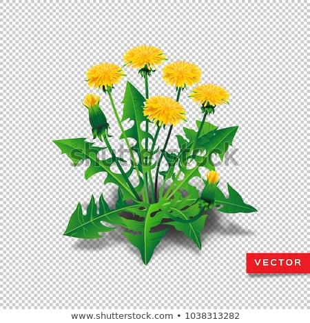 Trawy kwiaty roślin przezroczysty charakter Zdjęcia stock © romvo