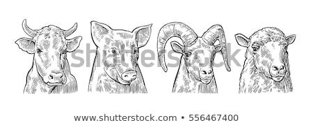 牛 · 手描き · スケッチ · アイコン · ベクトル - ストックフォト © rastudio