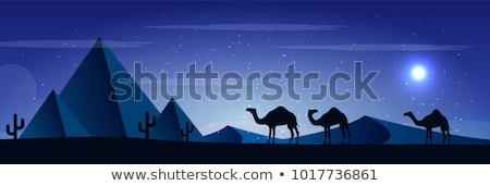 Pirámide camellos desierto ilustración palma Foto stock © bluering