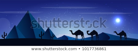 Pirâmide camelos deserto cena noturna ilustração palma Foto stock © bluering