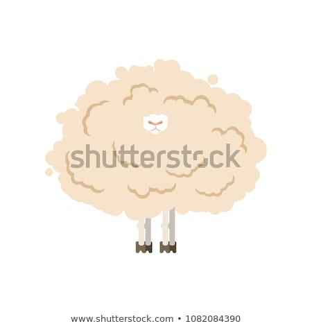 Peloso pecore isolato agnello texture Foto d'archivio © MaryValery