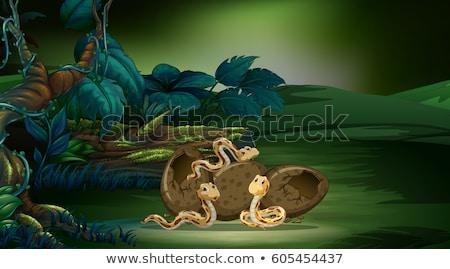 Erdő jelenet három kígyók tojások illusztráció Stock fotó © colematt