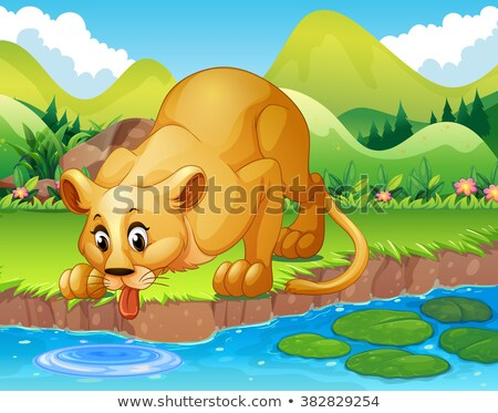 Lions drinking water from the pond Stock photo © colematt