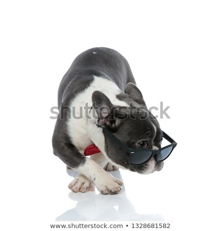 french bulldog with red bowtie and black sunglasses looking away Stock photo © feedough