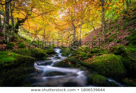 Patak kicsi vízesés erdő víz fa Stock fotó © ajn