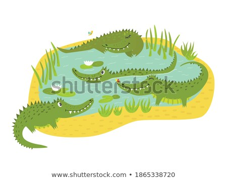 quatro · crocodilo · lagoa · ilustração · água · floresta - foto stock © colematt