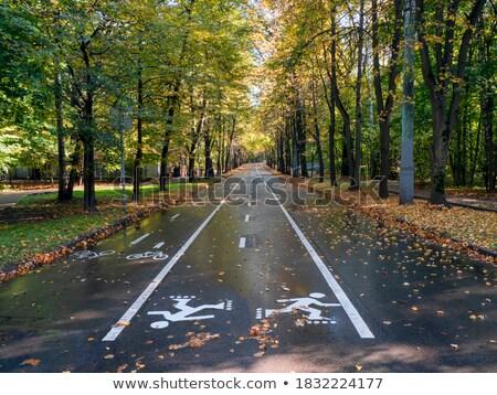 Wyścigi żółty rower asfalt utwór lata Zdjęcia stock © robuart