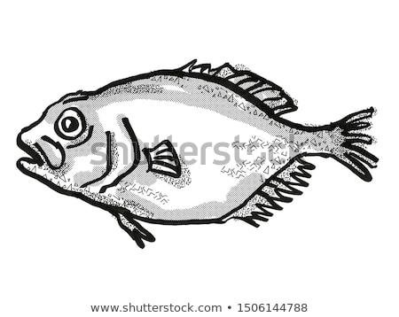 оранжевый Новая Зеландия рыбы Cartoon ретро рисунок Сток-фото © patrimonio