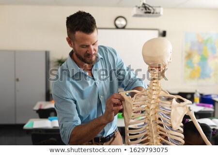 Male teacher fixing skeleton model in classroom of elementary school Stock photo © wavebreak_media
