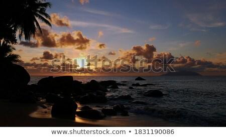 海 日没 目に見える ヤシの葉 ビーチ 休暇 ストックフォト © dmitry_rukhlenko