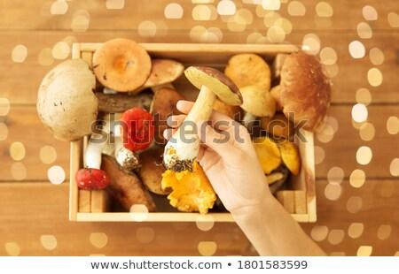Kéz tart tinóru gomba doboz ehető gombák Stock fotó © dolgachov