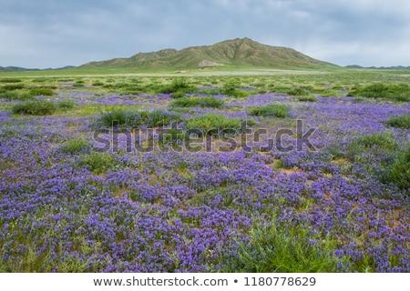 rebanho · camelos · montanha · montanhas · Mongólia · céu - foto stock © joyr