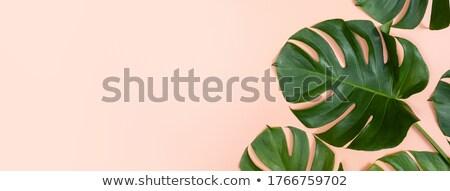 Renkli yeşil pembe yaprak damarlar Stok fotoğraf © jaykayl
