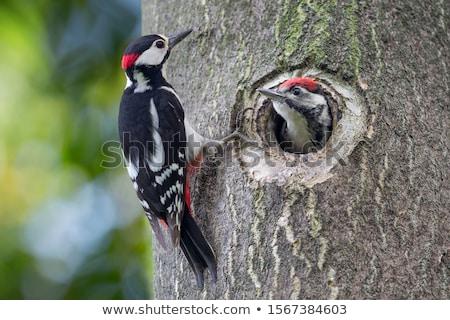 Glanzend houten knop natuur teken Stockfoto © wingedcats
