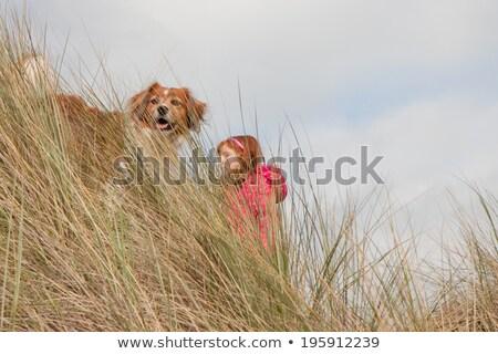 Dog wearing winter woollen clothing Stock photo © lovleah