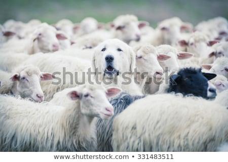 異なる · 群衆 · ボックス · グループ · 色 · 成功 - ストックフォト © donskarpo