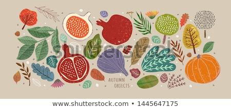 Stock fotó: Szett · ősz · gyümölcs · természet · gyönyörű · napfény