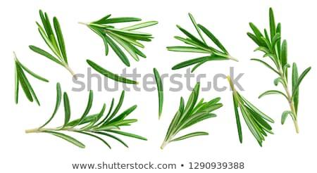 alecrim · galho · isolado · branco · folha · verde - foto stock © kitch