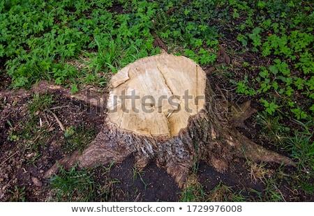 gehakt · beneden · boom · bomen · leggen · grond - stockfoto © Alenmax