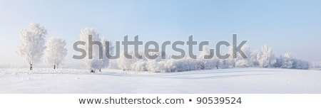 Winter landscape, birch branches covered with frost Stock photo © zeffss