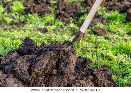 manure for organic farming stock photo © xedos45