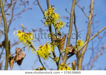 Ağaç 14 ahşap doğa kış bitki Stok fotoğraf © LianeM