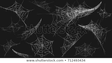 örümcek ağı ayrıntılı bakmak yeşil arka plan siyah Stok fotoğraf © hraska