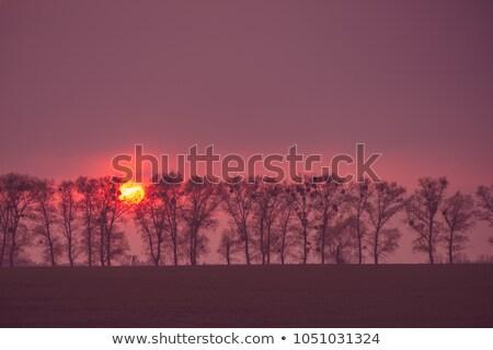 naplemente · mögött · domb · természet · tájkép · fény - stock fotó © ankarb