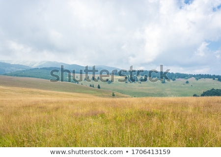 inekler · yüksek · ağaç · çim · dağ - stok fotoğraf © capturelight
