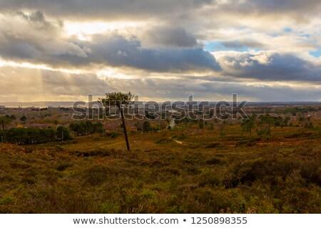 Urbana panorama capriccioso albero città Foto d'archivio © tolokonov