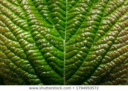 background and strukture in green Stock photo © armin_burkhardt