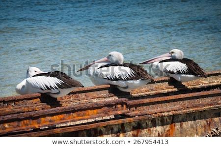 три · сидят · пирс · бирюзовый · морем · воды - Сток-фото © bradleyvdw