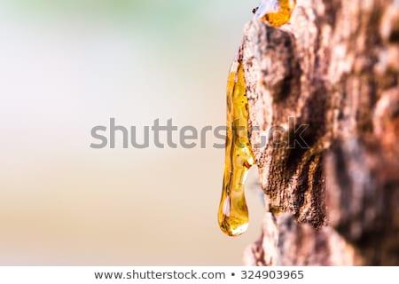Tree Sap Stock photo © THP