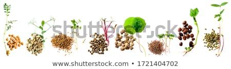 豆 · 孤立した · ボウル · 白 · 食品 - ストックフォト © m-studio