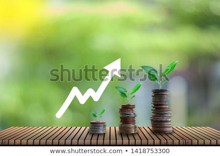 Cash Crops stock photo © JFJacobsz