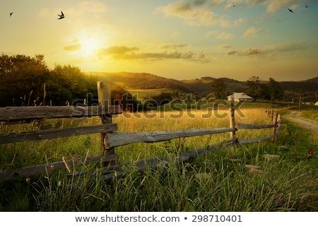 Paese panorama tramonto sunrise strada albero Foto d'archivio © Binkski