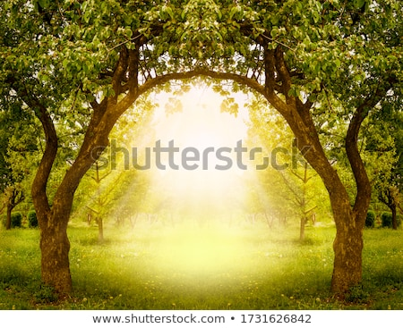 exit to green meadow stock photo © fotoyou