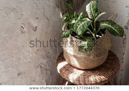 Green leafy plants with flowers Stock photo © bluering