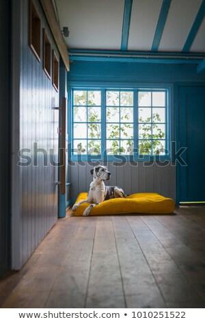 Nagyszerű portré fekete stúdió padló sötét Stock fotó © vauvau